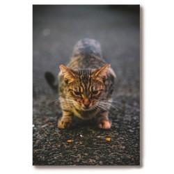 Kot Obraz na Płótnie...