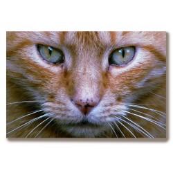 Koty dużo wzorów Obraz na...