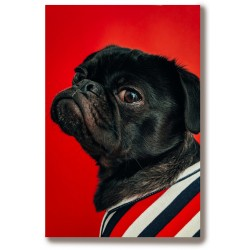 Psy dużo wzorów Obraz na...