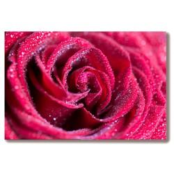 Róża kwiat Obraz na Płótnie...