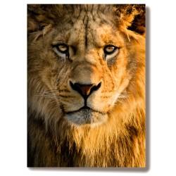 Lew zwierzęta Obraz na...