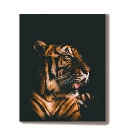 Tygrys zwierzęta Obraz na...