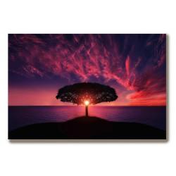 Drzewo zachód słońca piękny...