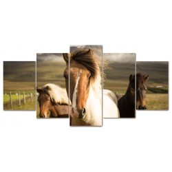 Konie ranczo koń 5...