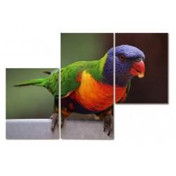 Papuga piękny 3 częściowy...