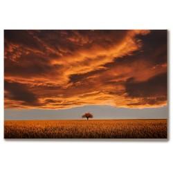 Samotne drzewo Obraz na...