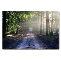 Droga w lesie Obraz na...