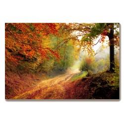 Droga w lesie jesień Obraz...
