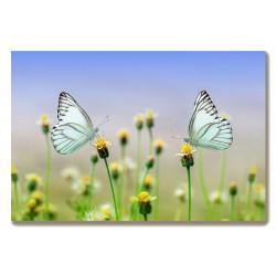 Motyle Obraz na Płótnie...